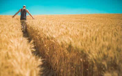 Nawozy organiczne – perfekcyjna możliwość?