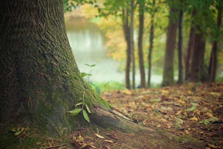 Piękny oraz {miły dla oczu zieleniec to nie lada wyzwanie, szczególnie jak jego konserwacją zajmujemy się sami.